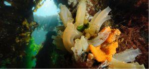 onderwaterwereld zeeland