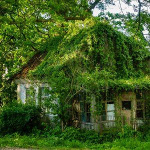 6x De tuin voorbereiden op uw vakantie
