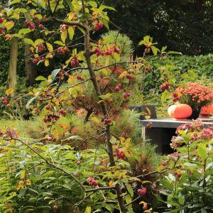 5x herfts in de tuin